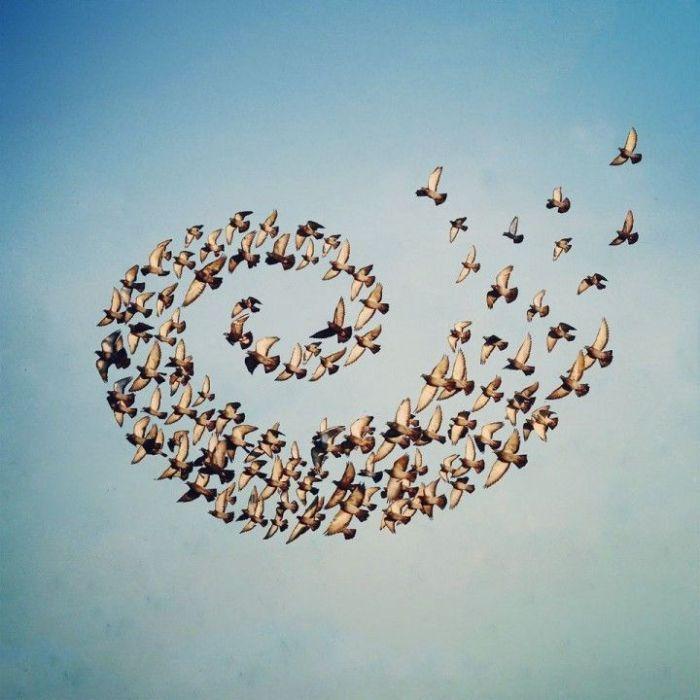 Flying Formation, Shaun Kardinal