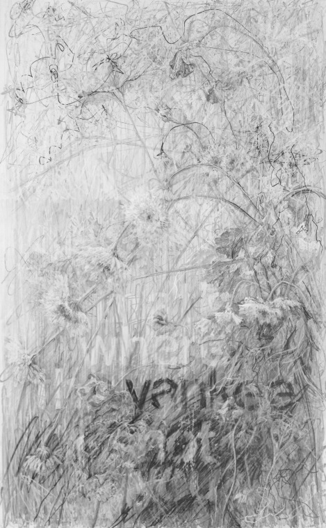 """Confederate Violets,"" 2015, graphite on clayboard, 19.5 x 12 in."